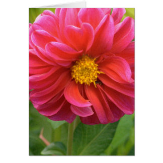 GORGEOUS PINK DAHLIA NOTE CARD