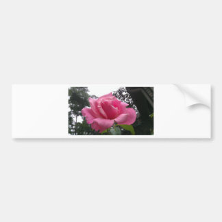 Gorgeous pink rose flower in bloom! bumper stickers