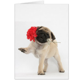 Gorgeous Pug Puppy with Red Carnation Greeting Card