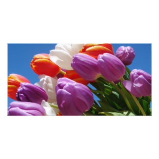 Gorgeous Purple Tulips Card Easter Mother's Day Photo Card
