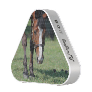 Gorgeous Quarter Horse