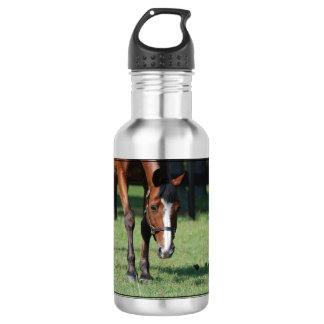Gorgeous Quarter Horse 532 Ml Water Bottle