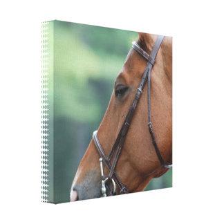 Gorgeous Quarter Horse Canvas Print