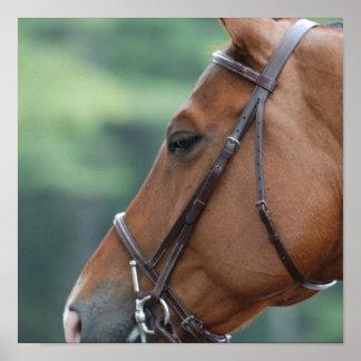 Gorgeous Quarter Horse Poster