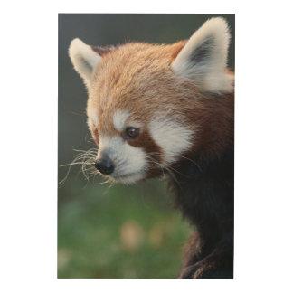 Gorgeous red panda portrait wood wall art