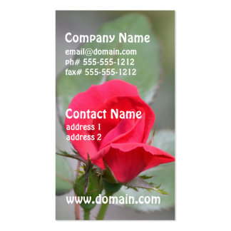 Gorgeous Red Rose Bud Double-Sided Standard Business Cards (Pack Of 100)