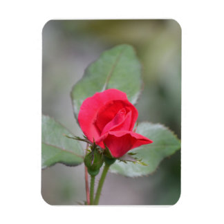 Gorgeous Red Rose Bud Vinyl Magnets
