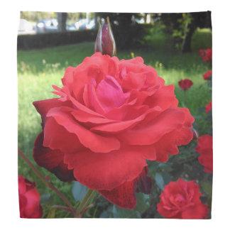 Gorgeous Red Roses Bandana