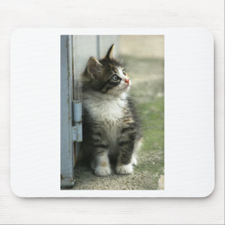 Gorgeous tabby kitten design - so cute! mouse pad