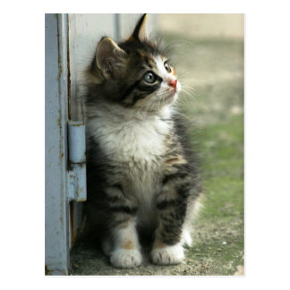 Gorgeous tabby kitten design - so cute! postcard