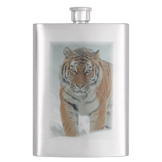 Gorgeous tiger in snow flasks