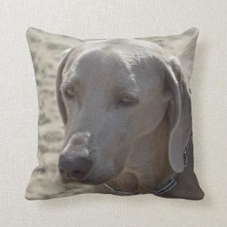 Gorgeous Weimaraner Cushion