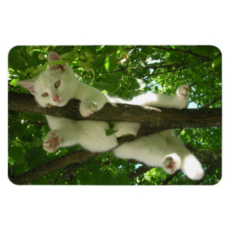 Gorgeous White Cat Hanging Out in Tree Magnet
