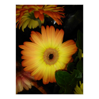 Gorgeous Yellow Gerbera Daisy Close-up Poster