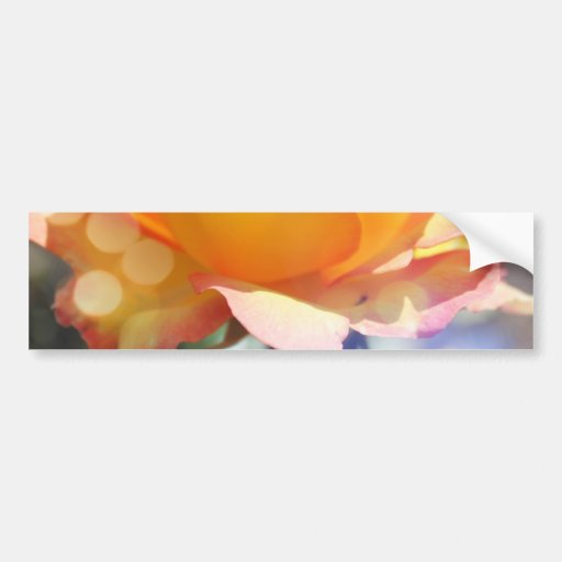 Gorgeous yellow rose flower.  Floral photography. Bumper Sticker