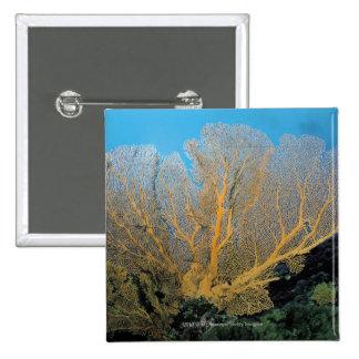 Gorgonian coral 15 cm square badge