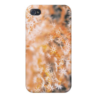 Gorgonian coral 2 iPhone 4/4S covers