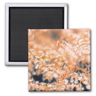 Gorgonian coral 2 magnet