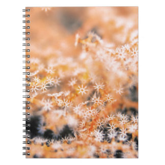 Gorgonian coral 2 spiral notebook