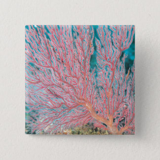 Gorgonian coral 3 15 cm square badge