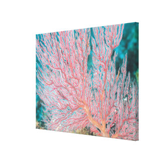 Gorgonian coral 3 canvas print