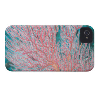 Gorgonian coral 3 Case-Mate iPhone 4 case