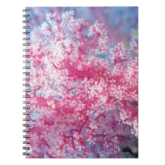 Gorgonian coral notebook