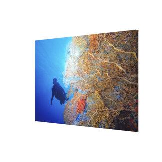 Gorgonian sea fan, Subergorgia mollis, with Canvas Print