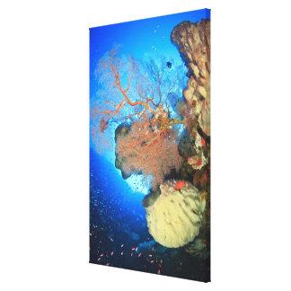 Gorgonian sea fans, Gunung Api Island, Banda Stretched Canvas Print