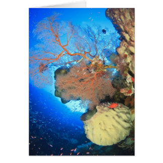 Gorgonian sea fans, Gunung Api Island, Banda Greeting Card