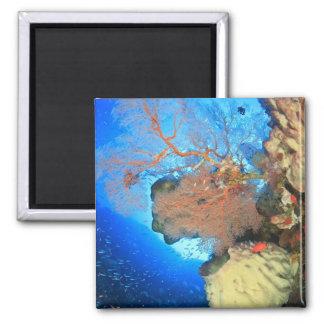 Gorgonian sea fans, Gunung Api Island, Banda Refrigerator Magnets