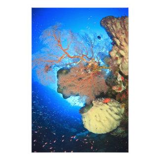 Gorgonian sea fans, Gunung Api Island, Banda Photograph