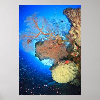 Gorgonian sea fans Gunung Api Island Banda Poster