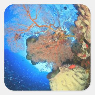 Gorgonian sea fans, Gunung Api Island, Banda Square Sticker