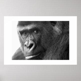 Gorilla #1 poster