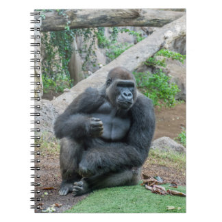Gorilla at the zoo notebook