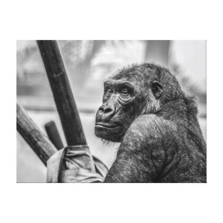 Gorilla - Black and White Photograph Gallery Wrap Canvas