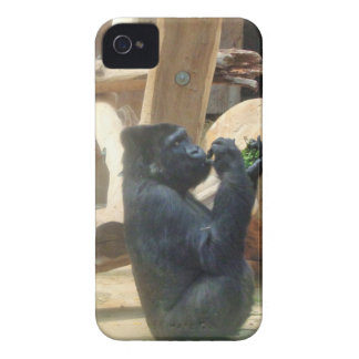 Gorilla eating his lunch, Animal, Wildlife, Ape iPhone 4 Covers
