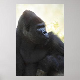 Gorilla Gaze Poster