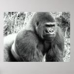 Gorilla in Black and White Poster