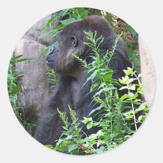 Gorilla in the mist classic round sticker