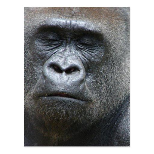 Gorilla Look Postcard