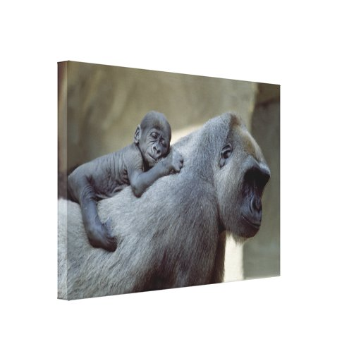 Gorilla Love Mum and Baby Canvas Prints