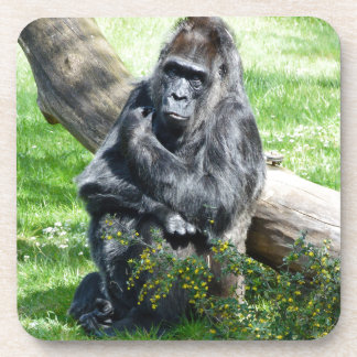 Gorilla Monkey Coaster