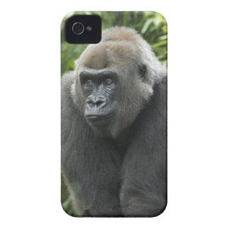 Gorilla Photo iPhone 4 Cases