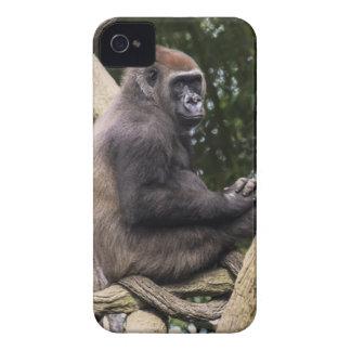 Gorilla Portrait iPhone 4 Cover