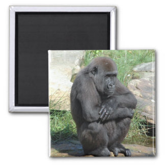 Gorilla Sitting Magnet Magnet