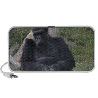 Gorilla sitting laptop speakers