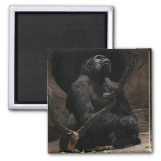 Gorilla Square Magnet