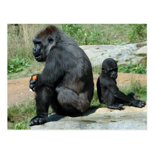 Gorilla Time Out Postcard